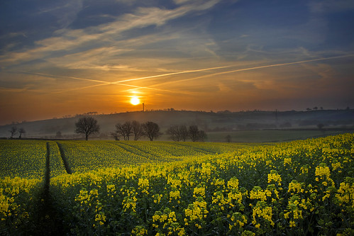 sunrise morning spring flowers mist early sun april oilseedrape oilseed yellow crop agriculture field farm farmer arable cropping tillage ulster northernireland alanhopps canon 80d sigma 1770mm landscape undulating tramlines outdoors sky grow brassica scarva countyarmagh