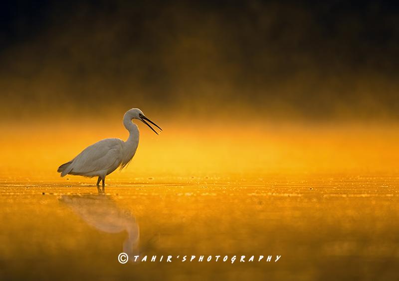 Hunting at Sunrise