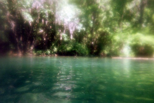 camera trees summer green film nature water beautiful river landscape photography photo cool interesting pretty florida springs disposable rainbowriver rainbowsprings