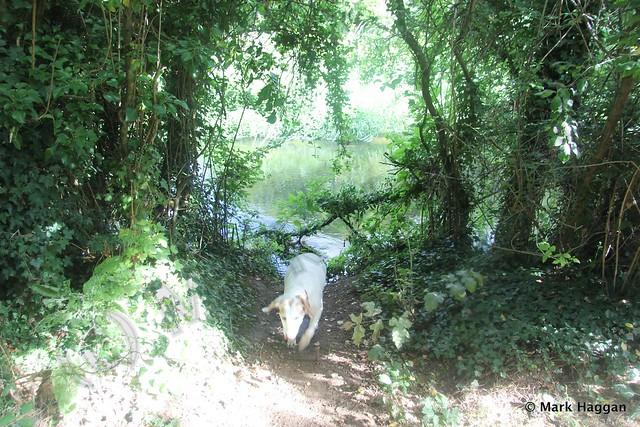 Berta in Harmondsworth Moor
