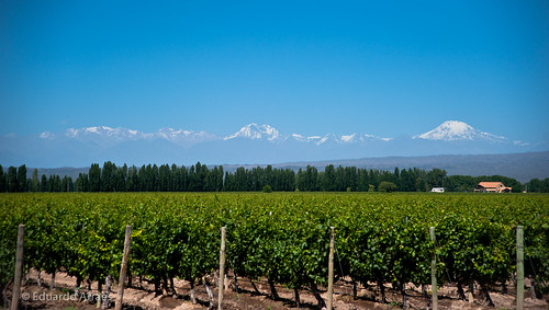 Wine Field | by Duda Arraes