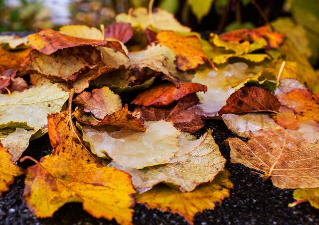 Autumn 4L8A4192