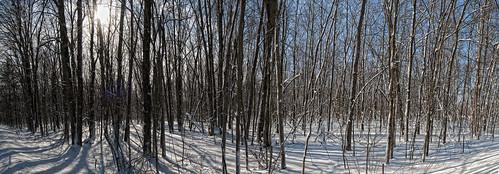 trees sunlight snow odessa loyalist countyroad6