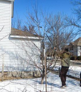 Fruit Tree Pruning Class | by EverydayUrbanGardener