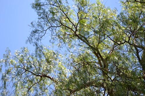 (13) Le Parc du Mugel et son jardin exotique - La Ciotat 32302304824_d6b0bc47c2
