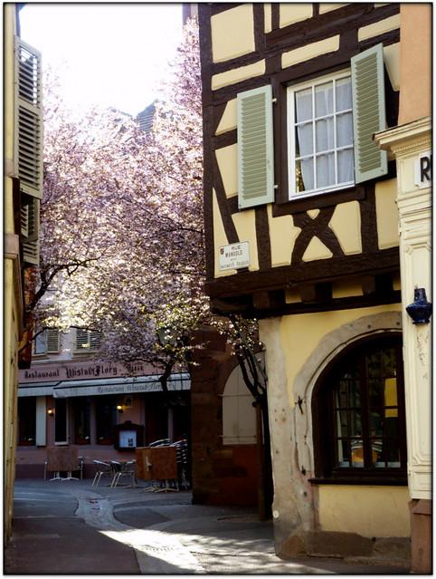printemps à Colmar..