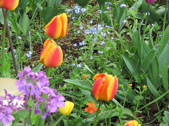 fröhliche Farben im Garten