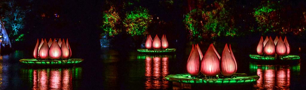 4 Lotus Flowers RoL
