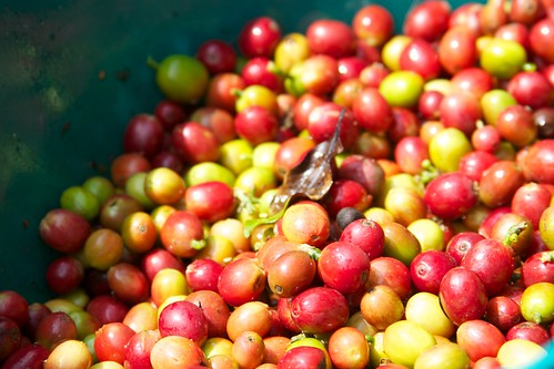 Colombia - Coffee Triangle 010 - coffee plantation tour | by mckaysavage