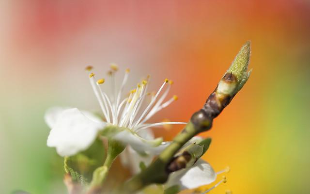 colourfull spring blossom