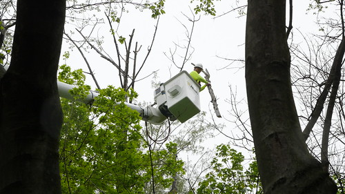 Photo of tree expert working on trees from bucket truck