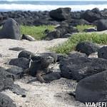 Viajefilos en San Cristobal, Galapagos 051