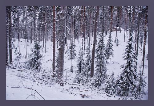 finland december 2012 ruokolahti