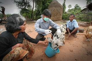 Noun Yav and his wife from the village of Damrey Slab have their pigs vaccinated by Sin Piseth from the ADRA/AusAID team. Photo: Kevin Evans, AusAID