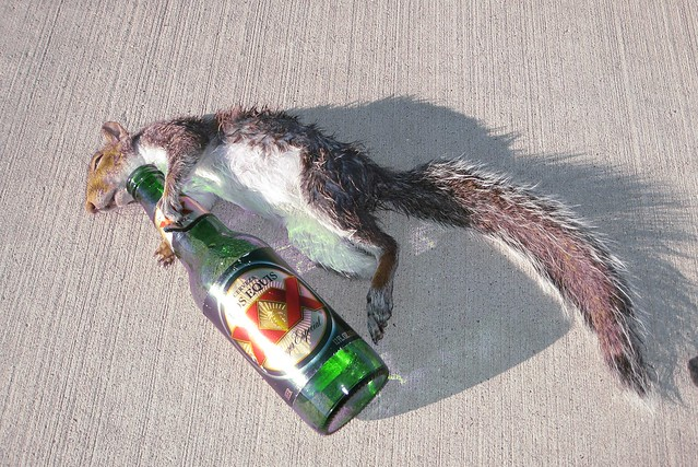 Drunk Squirrel (IMG_2401)