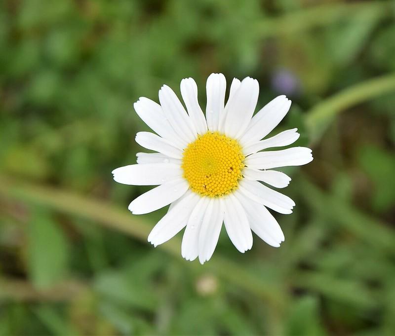 Daisy 28.04.2017