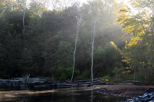desktop light wallpaper sun tree nature water sunshine gold golden newjersey ray bright background nj reservoir beam shore jersey sunrays desktopwallpaper howell desktopbackground manasquan manasquanreservoir