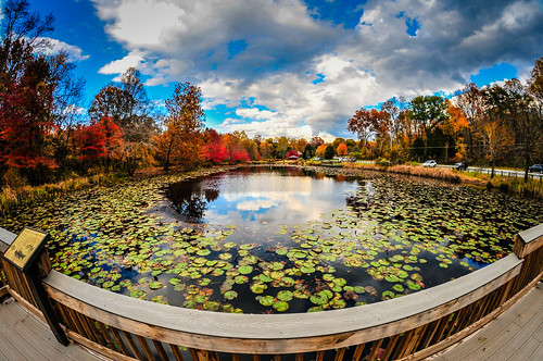 park county blue usa lake fish color colour green eye fall water colors leaves yellow virginia us leaf pond colours lily view unitedstates pad lilies american va fairfax northern parc centreville chantilly pads nymphaeaceae nuphar walney lutea