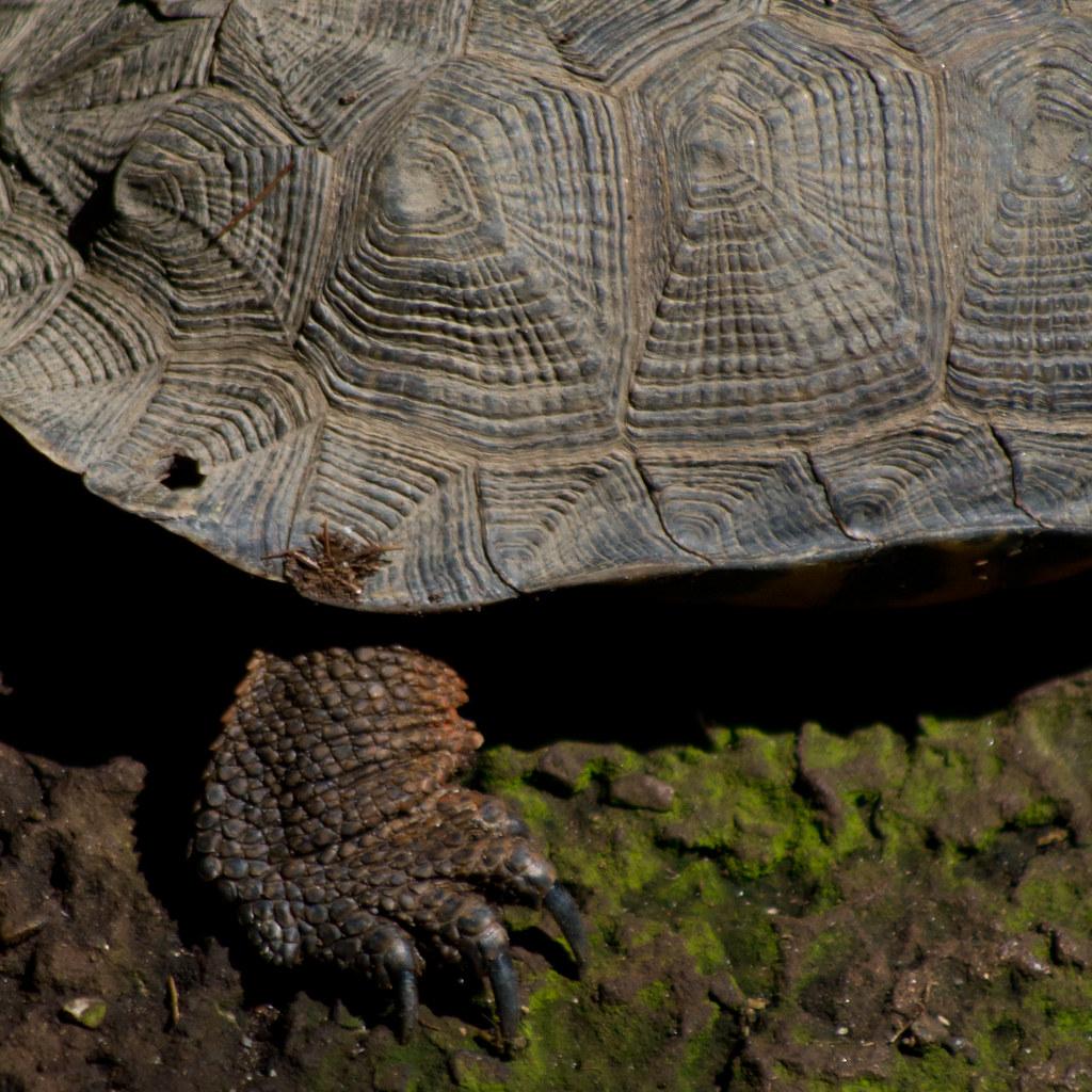 Tortoise paw