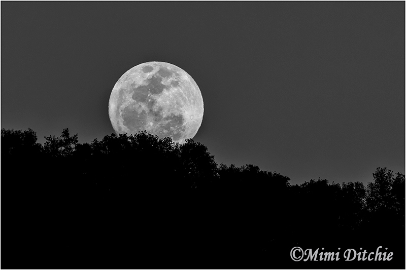 February Moonrise | Monthly moon shot, using my new 1 4X ext