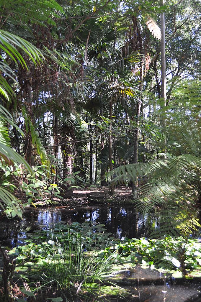 sir joseph banks native plant reserve, kareela nsw