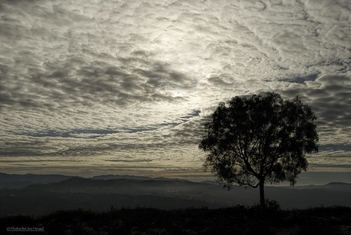 goodmorningsocal socal southerncalifornia sanjuancapistrano hills sunrise california ca clouds cloudy cloudsorangecounty cloudsstormssunsetssunrises theoc tree orangecounty oc outdoor horizon goodmorning morning morninglight cloudymorning goldenstate missionviejo view viewpoint silhouette silhouettes