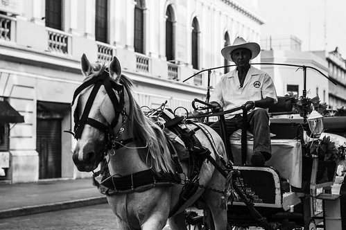 The Carriage Man