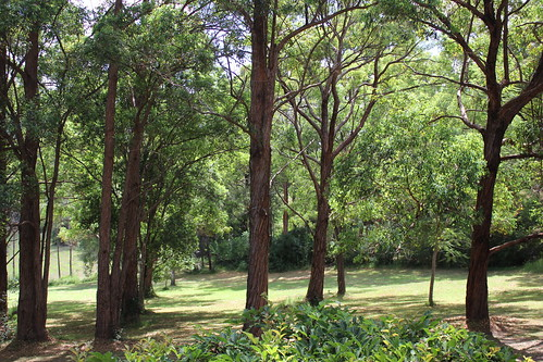 australia nsw travel byabarra trees green