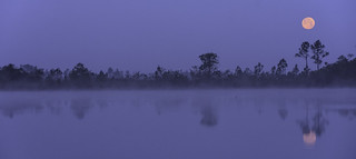 Moonset on a Foggy Morning | by Charles Patrick Ewing