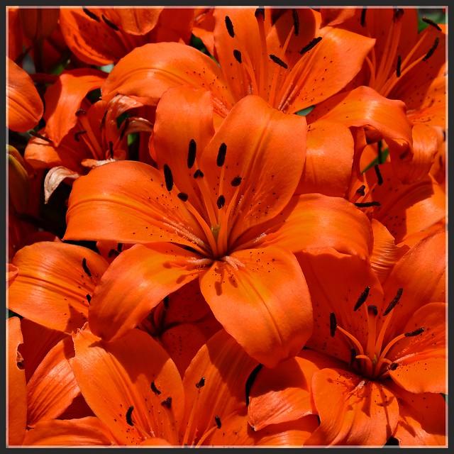 Very orange 6 6 2013