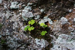 Auch auf Felsen wachsen Pflanzen