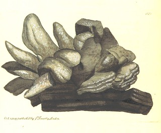 Image taken from page 142 of 'British Mineralogy: or coloured figures intended to elucidate the mineralogy of Great Britain. By J. Sowerby (with assistance). F.P' | by The British Library