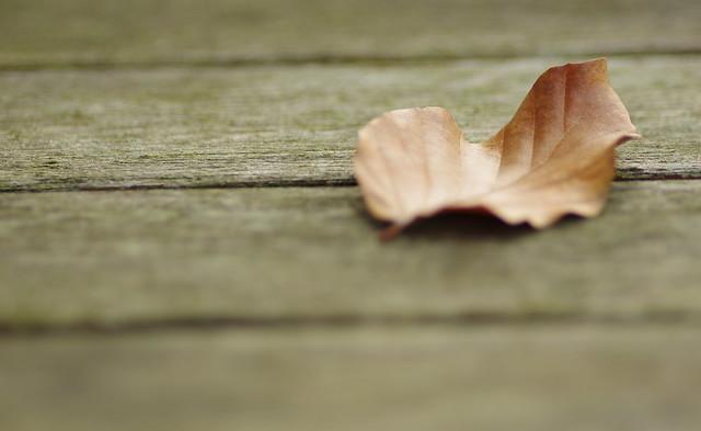 Dried leaf...........