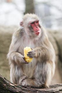 Bleh Monkey Melon   by Mark Dumont