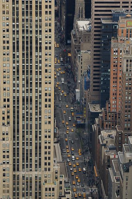 NY-Yellow ants