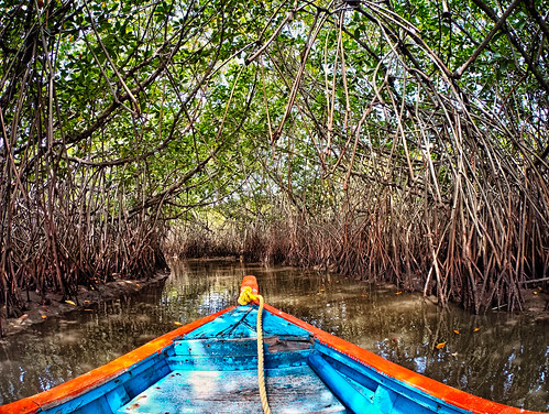 pichavaram saltwater mangrove nature landscape boating boat waterride natureride beautiful backwater backwaters incrediblechennai chennai incredibleindia india pondicherry ecr pichavaramboating travel travelclick htc htcbro htcre