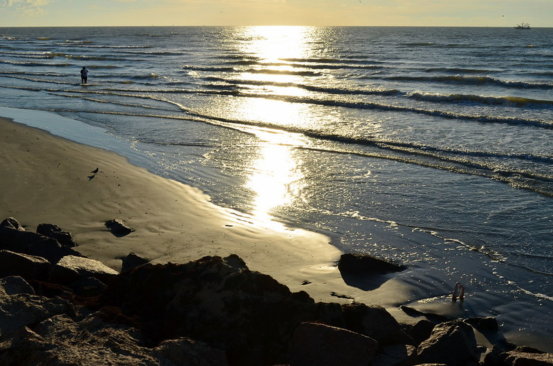 Todo mundo já catou concha na praia, Galveston, 2012. (6)