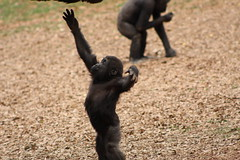 Atlanta Zoo - Reach