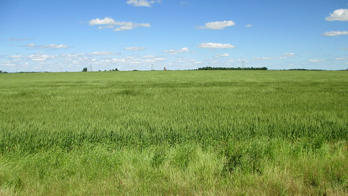 oklahoma ok landscapes delawarecounty wheat greatplains northamerica unitedstates us