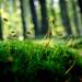 Moss in the forest by wilson.brett