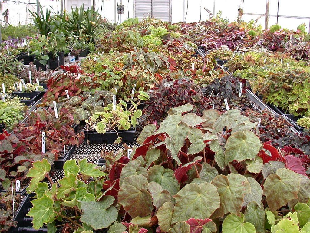 Taylor Greenhouses | John Boggan | Flickr  Taylor