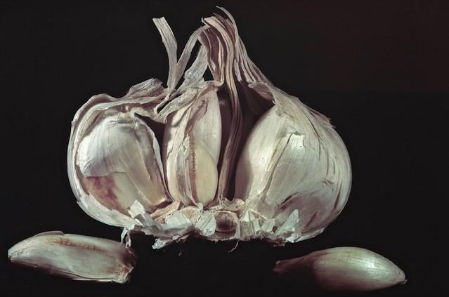 Garlic macro