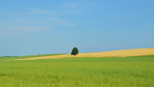 sky tree nature field germany landscape deutschland countryside thüringen natur feld thuringia landschaft grabe 2015 unstrutwerraradweg unstruthainichkreis