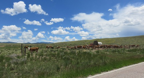colorado co landscapes custercounty rockymountains animals cattle northamerica unitedstates us cows