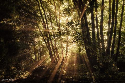 light england sunshine woodland unitedkingdom sony gb sunrays dorchester a99 sonyalpha andyhough slta99v littlewittenhamwood andyhoughphotography