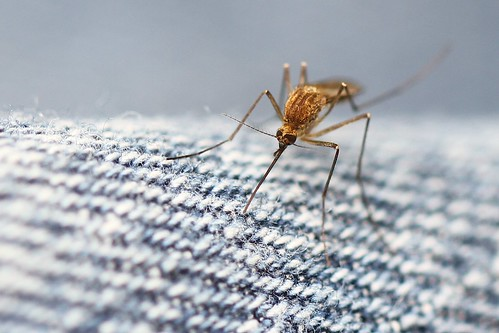 Mosquito on my pants!   by photochem_PA