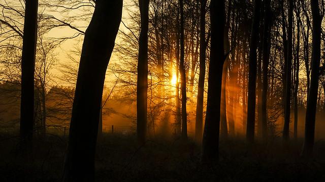 Sun Through Savernake Dust 1