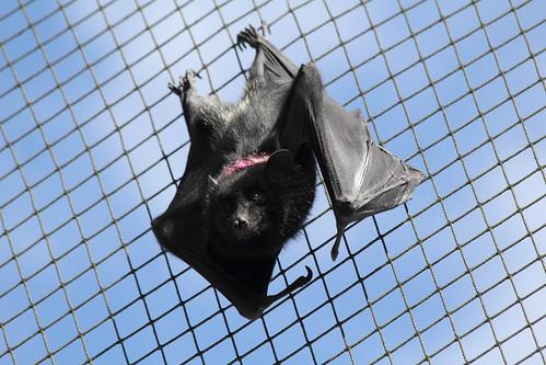 Na Na Na Na Na Na Na Na Na Na Na Na Na Na Na Na - FRUIT BAT! | by charliejb
