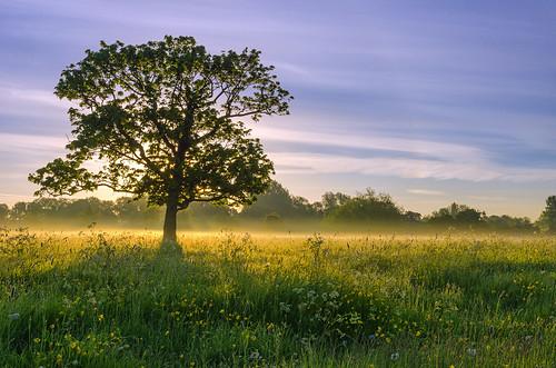 light summer mist tree landscape dawn nikon meadow warwickshire alcester d7000 jactoll