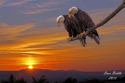 sunset sun mountains nature clouds landscape evening washington eagle wildlife baldeagle feathers aves raptor yakima omot avianexcellence almostanything scenicsnotjustlandscapes